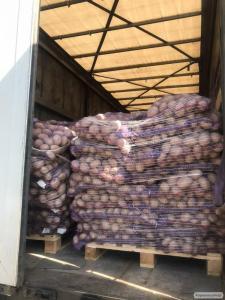 Картопля, картопля, бараболя, картопля, Розпродаж,