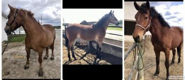 Лошади на продажу: Кобыла, Лошадь и Жеребец