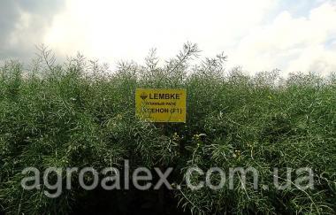 Ксенон насіння озимого ріпаку Lembke