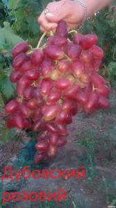 Продам черенки(чубуки) винограда