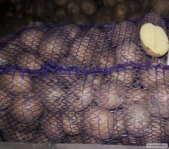 Продам насіннєву картоплю Рів'єра