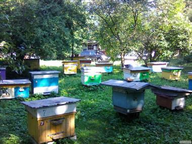 продажа бджолопакетів