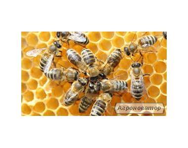 Пчелопакеты породы Полесская