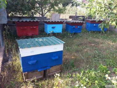 Вулики з бджолами, бджолосімї, вулик дадан
