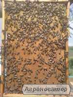 Продам пчелопакеты на украинскую рамку