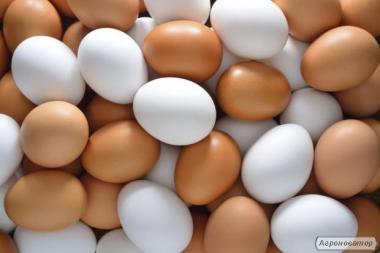 Яйця курячі харчові, столові с-1, добірні