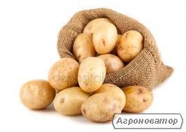 Куплю картофель оптом от 5 тонн.