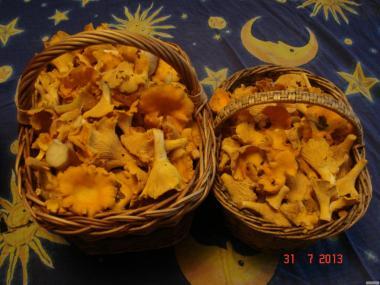 Лечебные  грибы