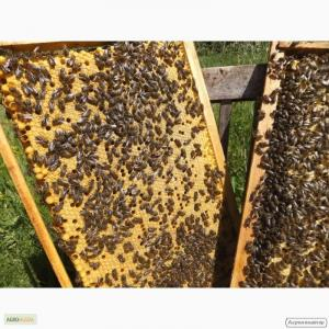 Продам бджолопакети породи карпатка