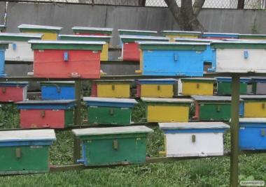 Пчеломатки Карпатки Тип Вучковский 2020, Плодные, меченые.(матки)