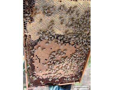 Пчелопакет 4х рамочный