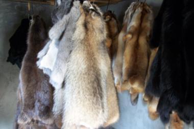 Продам шкуры  мех , разные