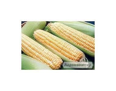 Кукуруза Пивиха