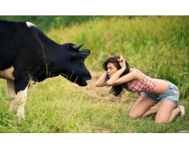 Купить заменитель цельного молока для телят Заменители цельного молока