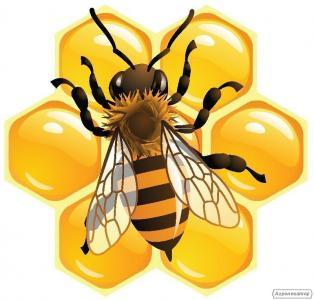 Продам бджолопакети 20 шт.