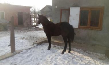 Продам Лошадь 8 Месяцев!