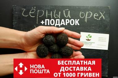Орех Чёрный семена (10 штук) Juglans nigra для саженцев)