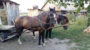 Продам коней(торг)