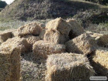 Продам пшеничну тюковану солому