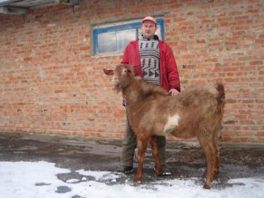 Продам нубийского 50% козла