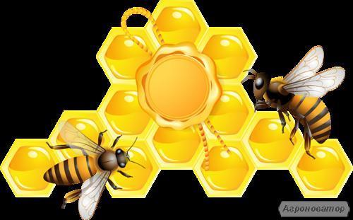 Продам пчелосемьи, цена договорная