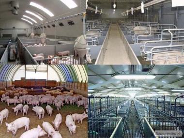Вентиляція свиноферм і ферм для великої рогатої худоби.