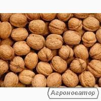 Куплю грецкий орех в скорлупе