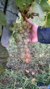 Купить вино от украинского крафтовой винодела KeysWine