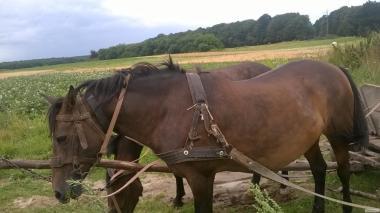 Продам пару рабочих лошадей (две лошади)