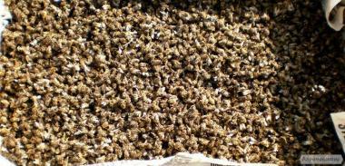 Подмор пчелиный зимний
