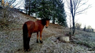 Породам доброго коня