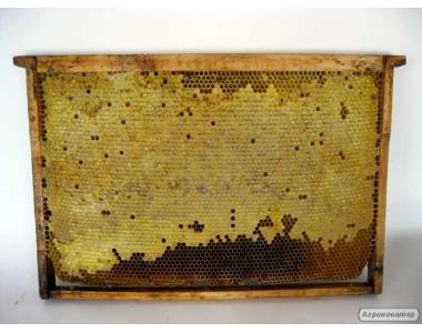 Продаю Пчелопакети