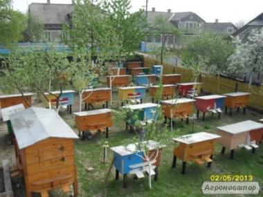 Продам бджолопакети Карпатської поорди