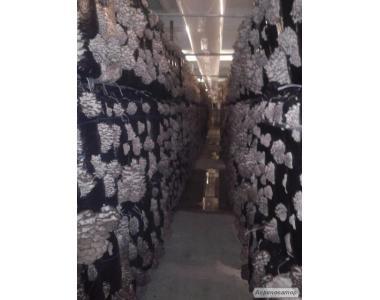 Продаю грибы
