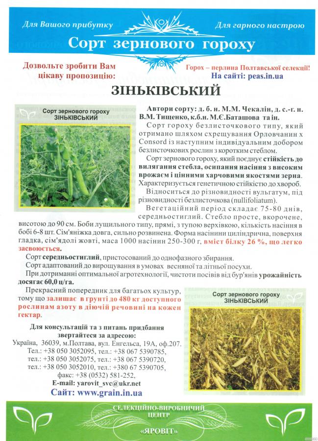 ГОРОХ Сорт «Зіньківський»