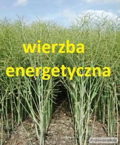 Оренда діючої рослинницької ферми