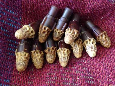 Продам плодные, меченые матки- Карпатской породы Вучковського типа