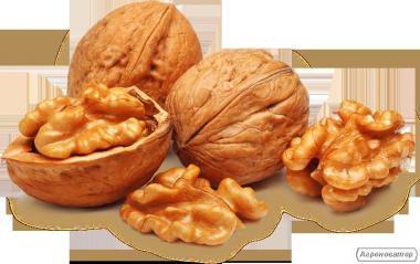 Закупаем Грецкий орех и семечку тыквы сероволжская