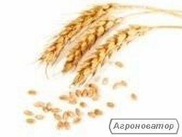 Услуги зернового брокера. Отработка экспортных поставок.