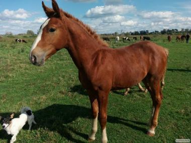 Продам молодое конь (конек) в возрасте 5 месяцев. Андрей тел. 0978417729