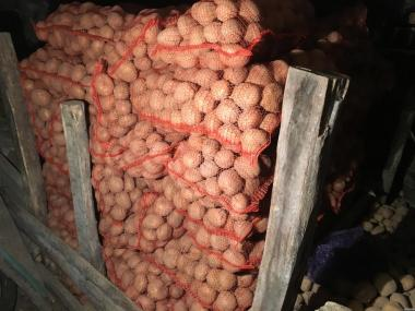 Продам домашнюю картошку больших размеров (для еды) сорта