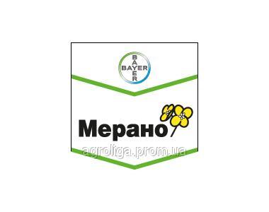 Озимый рапс Мерано