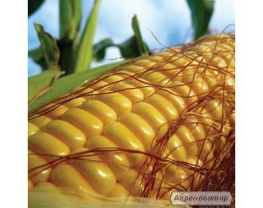 Посевной материал кукурузы Трехлинейный гибриды