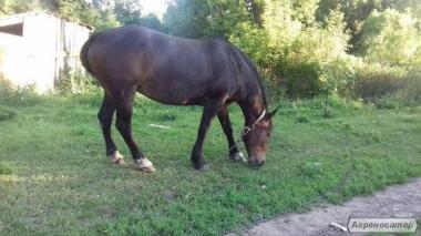 Продам дуже гарну конячку