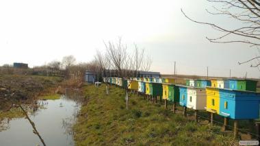 Продам бджолопакети і бджолосім'ї з вуликами карпатської породи