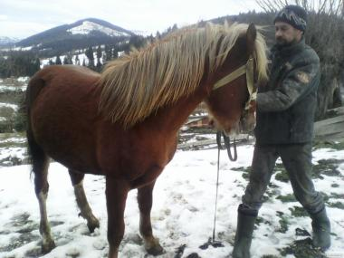Продам коня ТЕРМІНОВО