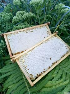 Стільниковий (сотовий) мед з липи