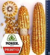 Семена кукурузы пионер ПР39Т13 / PR39Т13 ФАО 250