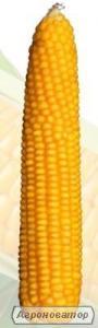 Насіння кукурудзи Кремінь 200 СВ
