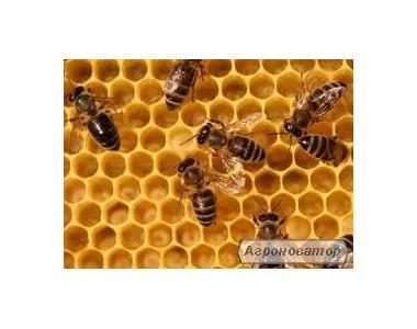 Бджолині сім'ї (оводки) на рамках дадан